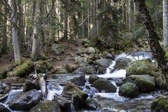 Bergrivier in Kaukasisch beuk-spar bos Stock Afbeelding