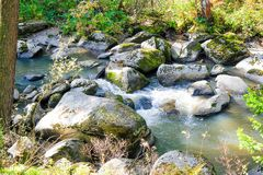 Bergrivier met bos Stock Fotografie