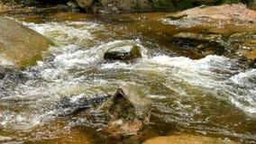 Bergrivier met koud kristalwater Gladde stenen en schuimend koel water rond Lawaai van water stock videobeelden