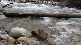 Bergrivier met puin van logboeken en takkenstromen onder de stenen stock footage