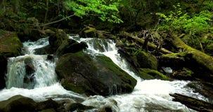 Bergrivier met stroomversnelling en watervallen - stroom die door dikke groene bosstroom in dicht hout vloeien stock video
