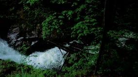 Bergrivier met stroomversnelling en watervallen - stroom die door dikke groene bosstroom in dicht hout vloeien stock videobeelden