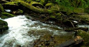 Bergrivier met stroomversnelling en watervallen - stroom die door dikke groene bosstroom in dicht hout vloeien stock footage