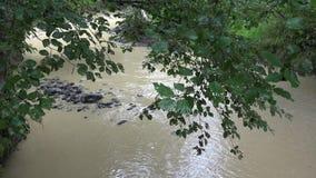 Bergrivier op Regenende Dag, de Lentebeek, Kreekstenen, Rotsen, Aardweergeven stock videobeelden