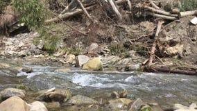 Bergrivier in zonnige dag stock videobeelden