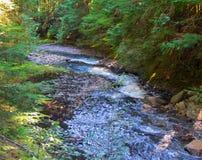 Bergrivieren in de bossen dichtbij Vancouver September 2014 Brits Colombia, Canada stock afbeeldingen