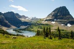 Bergsfår i ängarna av glaciärnationalparken arkivfoton
