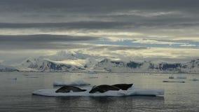Bergsikt i Antarktis stock video