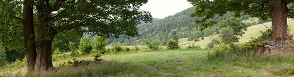 Bergsikt med den stora treen Royaltyfria Bilder