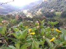 Bergskedja Badulla Sri Lanka Arkivbilder