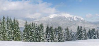 Bergskedja med granar i förgrund i Carpathians i wint Royaltyfri Fotografi