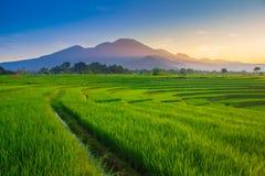 bergskedja skönhetmorgonpanoraman indonesia royaltyfri foto