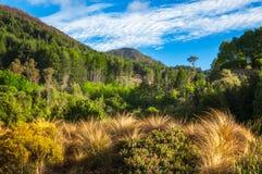 Bergskedjalandskap på Wilson Bay, NZ Royaltyfria Bilder