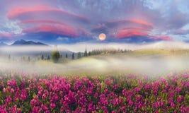 Bergskedjor av Ukraina Royaltyfria Bilder