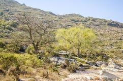 Bergskog Arkivbild