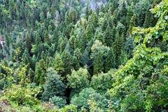 Bergskog Abkhazia Royaltyfri Fotografi