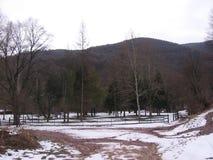 Bergskog i Grza Arkivfoton