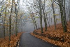 Bergskog i höst arkivfoton