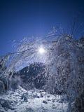 Bergskog i vinter arkivfoto