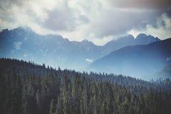 Bergskog som täckas av dimma Fotografering för Bildbyråer