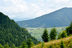 Bergskogträd Fotografering för Bildbyråer