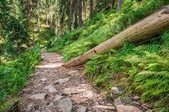 Bergskogväg mycket av stenar Fotografering för Bildbyråer