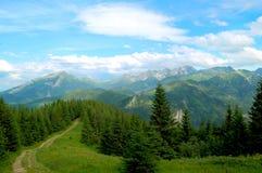 Bergsleep bij de rand van het bos Royalty-vrije Stock Foto's