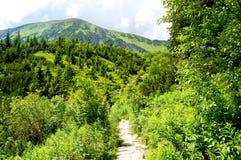 Bergsleep bij de rand van het bos Stock Afbeeldingen