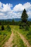 Bergsleep met pijnbomen Stock Foto's