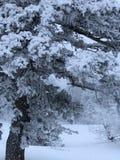 Bergsnö Royaltyfria Bilder