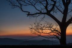 Bergsoluppgång med trädet i förgrund arkivbild