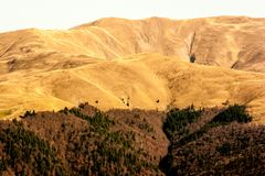 Bergspitzen in einem warmen hellen Sonnenlicht Tannenbäume abwärts Stockbild