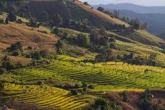 Bergspitzen gestalten, Pah Pong Piang in maejam chiangmai, Paddy landschaftlich Stockfoto