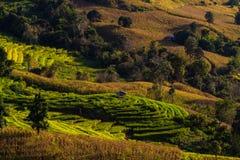 Bergspitzen gestalten, Pah Pong Piang in maejam chiangmai, Paddy landschaftlich Stockbild