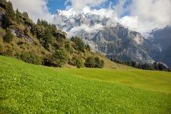Bergspitzen, Ströme und Wiesen in Grindelwald, die Schweiz Stockfotografie