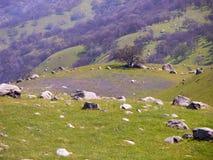 Bergssidaäng Arkivbilder