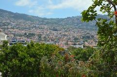 Bergssida i Funchal bak träden Arkivbilder