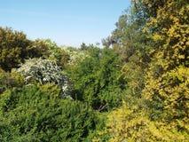 Bergssida med tät vegetation Royaltyfria Bilder