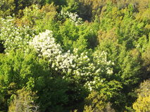 Bergssida med tät vegetation Arkivbild