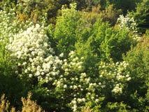 Bergssida med tät vegetation Arkivbilder