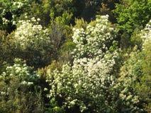 Bergssida med tät vegetation Royaltyfri Bild