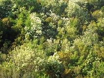 Bergssida med tät vegetation Royaltyfri Fotografi