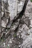 Bergsteen en groen gras Achtergrond Textuur blur stock fotografie
