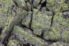 Bergstenar av grå färg- och gräsplan- och gulingblommor på vagga Royaltyfria Foton