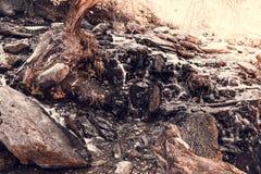 Bergström i skogen arkivbild