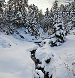 Bergström i vinterskogen som täckas med snö royaltyfria bilder