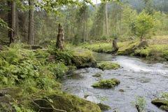 Bergström som flödar till och med skogen Arkivbilder