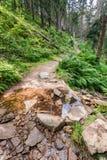 Bergströmmen korsar den fotvandra slingan Royaltyfri Fotografi