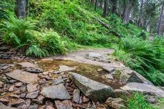 Bergströmmen korsar vandringsledet i skog Fotografering för Bildbyråer