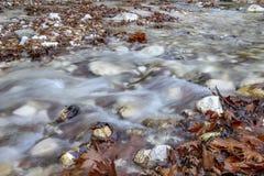 Bergstroom die tussen de stenen stromen die en met bruine de herfstbladeren begroet stock foto's
